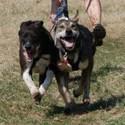 2-Hunde
