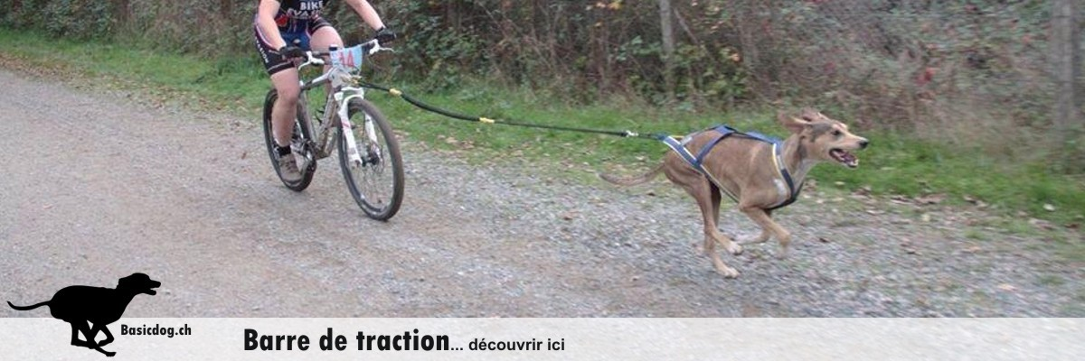 Bikejöring Leinenhalterung